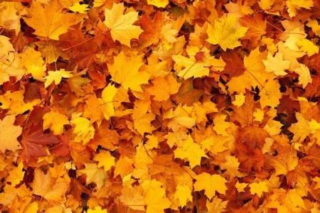 Herbstlaub in der Gemeinde muss weiterhin weite Wege zurücklegen